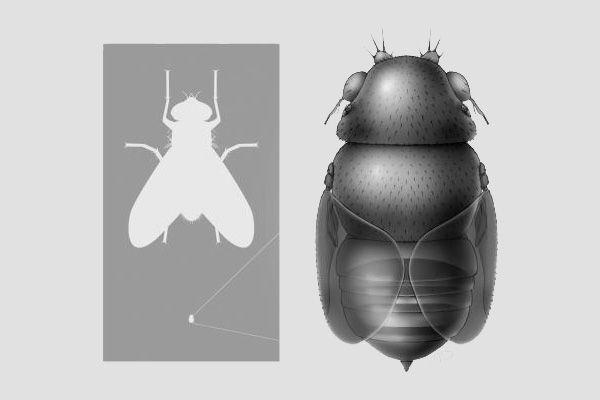 A világ legkisebb parazitája. A férgek nem zavarhatják