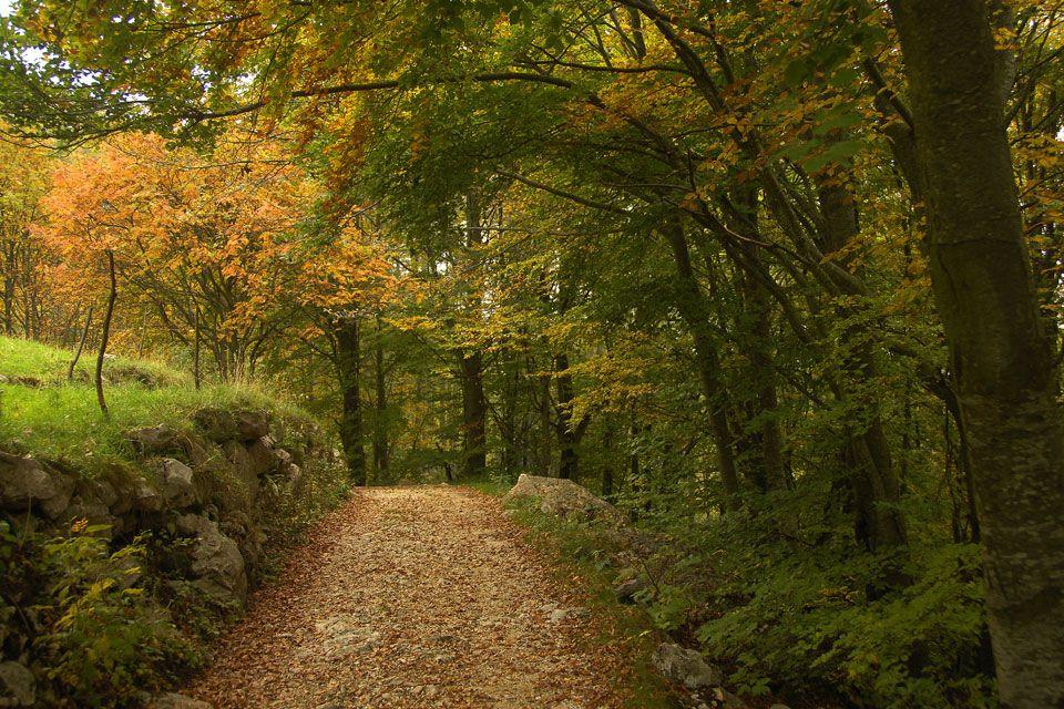 erdő (erdő)