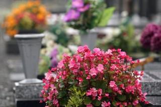 temeto(960x640)(3).jpg (temető, )