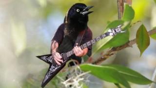 MK - metál (madár, kar, )
