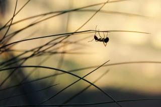 hangya (hangya, rovar, bogár, poszt itt. gerlóczy márton, )