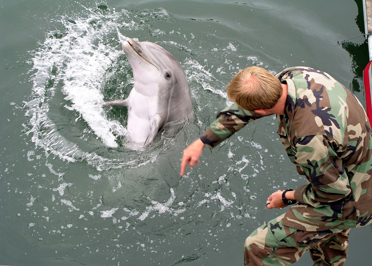 1280px-Military-trained-dolphin
