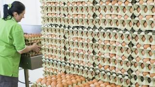 Lajosmizse, 2015. április 30.Kocsis Henrietta tojásokat helyez a szalagra a tojáscsomagoló üzemben a Mizsetáp Kft. új baromfitelepének és tojáscsomagoló üzemének átadóünnepségét követően Lajosmizsén 2015. április 30-án. A zöldmezős, 1,5 milliárd forintból megvalósult beruházás Közép-Európa legkorszerűbb étkezési tojást előállító üzeme.MTI Fotó: Ujvári Sándor