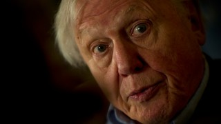 British broadcaster David Attenborough speaks during an interview at an event to celebrate the Scott Antarctic Expedition Centenary with the launch of 'Edward Wilson's Antarctic notebooks' in London on November 17, 2011. AFP PHOTO / ADRIAN DENNIS / AFP / ADRIAN DENNIS