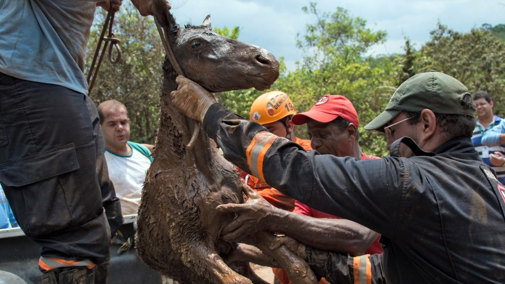 Brazilian firemen rescue a foal which was trapped in the mud after a dam burst in the village of Bento Rodrigues, in Mariana, Minas Gerais state, Brazil on November 6, 2015. A dam burst at a mining waste site unleashing a deluge of thick, red toxic mud that smothered a village killing at least 17 people and injuring some 75. The mining company Samarco, which operates the site, is jointly owned by two mining giants, Vale of Brazil and BHP Billiton of Australia. AFP PHOTO /  CHRISTOPHE SIMON