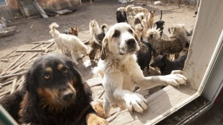 """Dogs which were saved by former Chinese millionaire man Wang Yan are pictured at his animal rescue center in Changchun city, northeast China's Jilin province, 17 November 2015.  In order to save hundreds of dogs from the slaughterhouse, a former Changchun millionaire has gone broke founding an animal rescue center that helps to find local strays a loving home. 29-year-old Wang Yan, from Gelong town in Jilin province, once had a net worth of several million yuan. But he has since given it all away, in a journey that started one day in 2012 when his beloved pet pooch went missing. """"I went looking everywhere, but all to no avail,"""" he remembers. """"Finally someone let me go into the slaughterhouse to try my luck there."""" According to Sina News, Wang hung around the slaughterhouse for a week, but was unable to find his lost dog. Instead, he found scenes of bloody slaughter that he was unable to shake from his mind. After that experience, Wang used his fortune to buy the slaughterhouse and establish an animal shelter inside an abandoned steel factory. Over time, he gradually built up the shelter, finding more and more homes for strays. """"Right now, we only have 215 dogs,"""" he said. """"The most we've had at one time is 1,000, many of them have been adopted."""""""