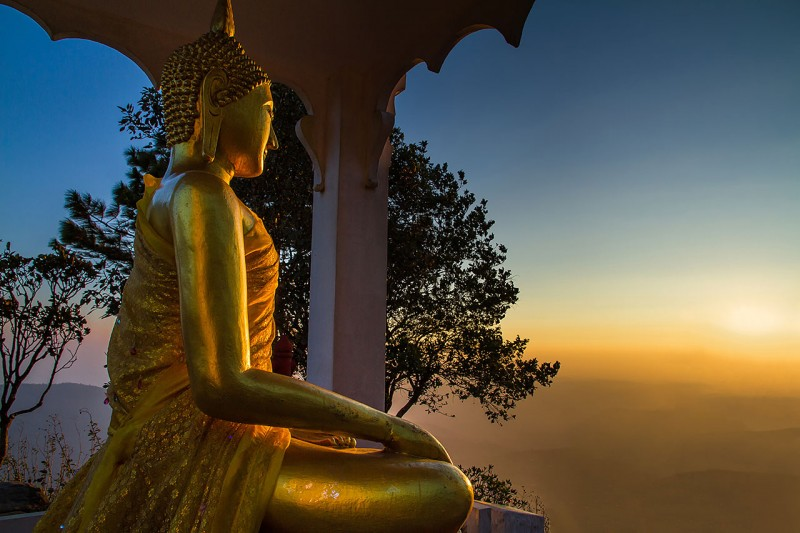 Golden Buddha in a pine forest at dawn.