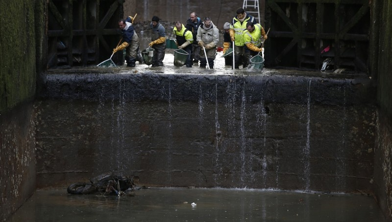 Workers remove fish from the canal Saint Martin in Paris on January 6, 2016 before a drainage and cleaning operation. / AFP / PATRICK KOVARIK