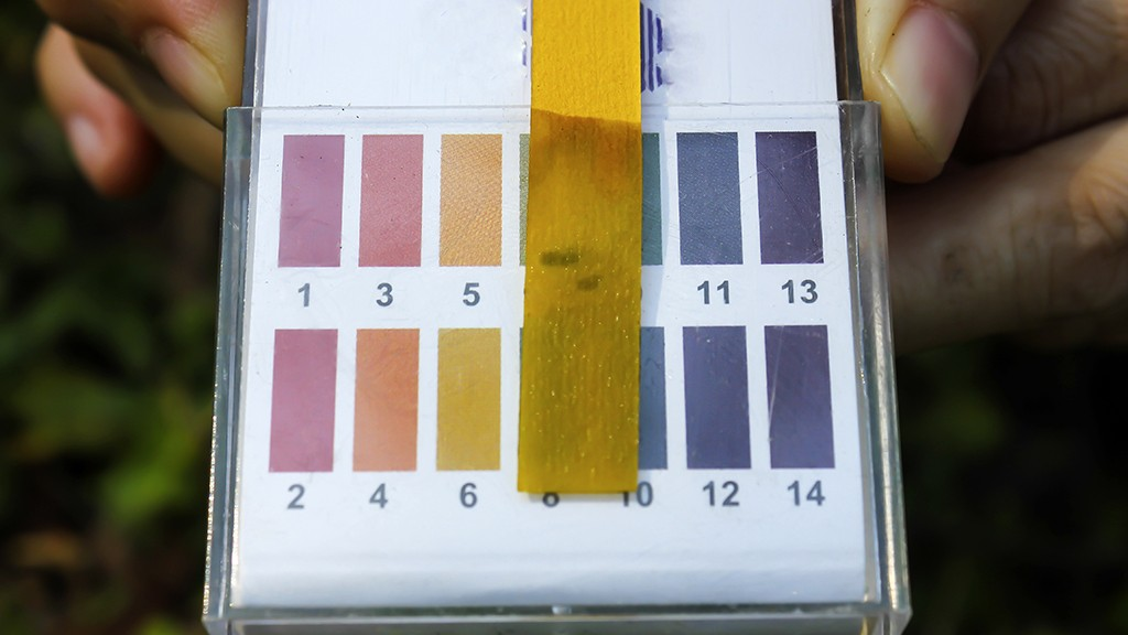 Litmus ph test paperisolated
