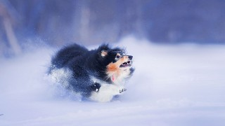 dog running fast in the snow