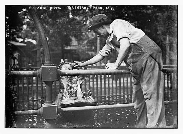 Date Created/Published: [between ca. 1910 and ca. 1915] - Library of Congress, Prints & Photographs Division, Bain Collection - Reproduction number: LC-DIG-ggbain-13519 (digital file from original negative) - Rights Advisory: No known restrictions on publication.
