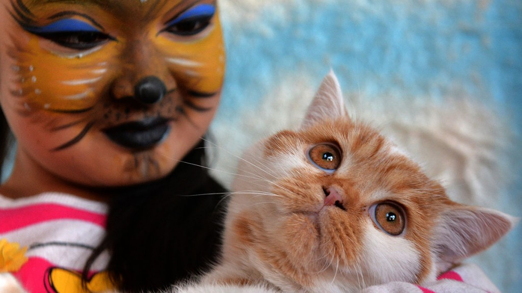 An owner holds her Scottish Straight cat during a cat exhibition in Bishkek on March 20, 2016.  / AFP PHOTO / VYACHESLAV OSELEDKO