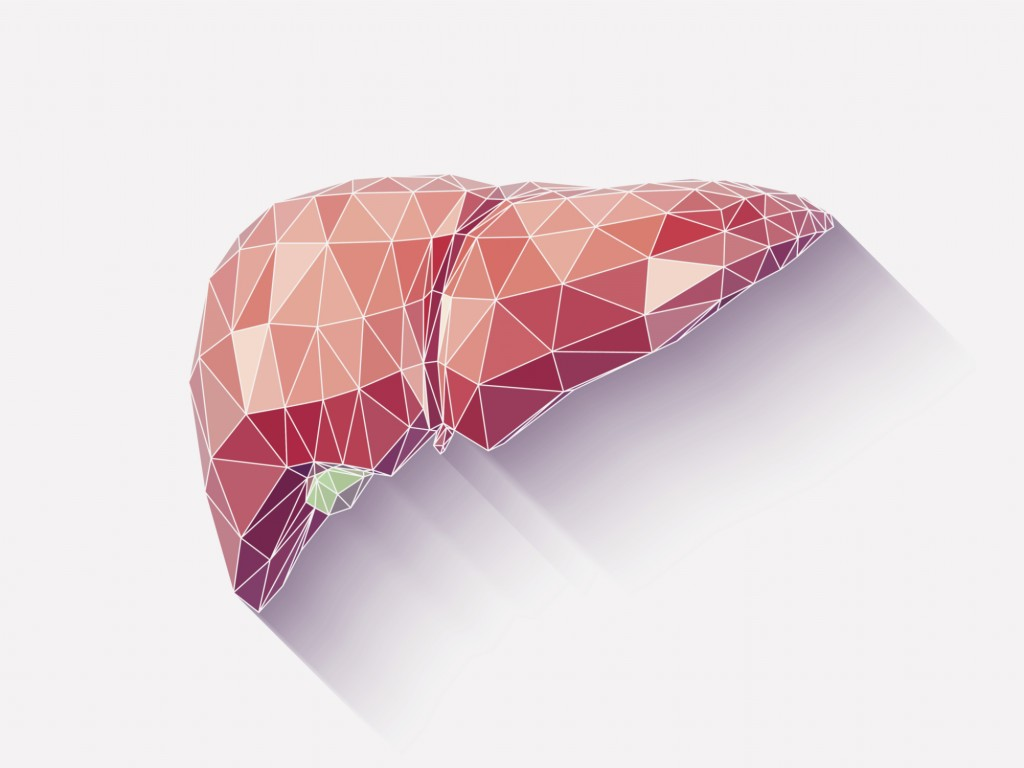 Liver poly faceted