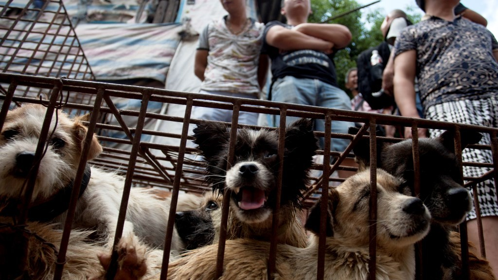 Vendors wait for customers to buy dogs in cages at a market in Yulin, in southern China's Guangxi province on June 21, 2015.  The city holds an annual festival devoted to the animal's meat on the summer solstice which has provoked an increasing backlash from animal protection activists.      CHINA OUT    AFP PHOTO / AFP PHOTO / STR