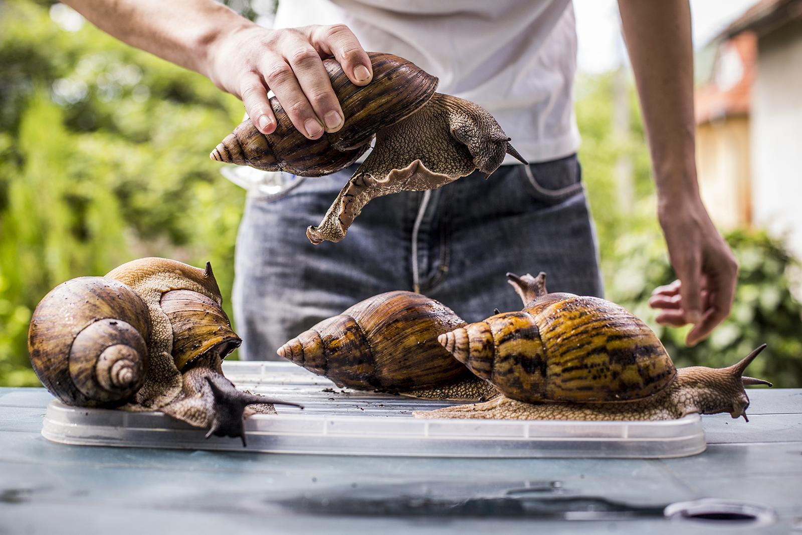 Mi hasznos az emberi bőr számára az elhullott csigák számára?