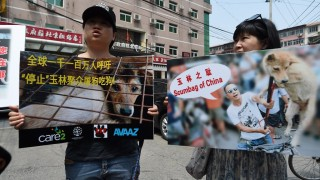 Animal activists display protest banners outside the Yulin government office in Beijing on June 10, 2016. A group of Chinese and international animal activists presented a petition signed by 11 million people calling on authorities to end the annual Yulin dog meat festival. The activists claim thousands of dogs, many of the them stolen from pet owners, are slaughtered each year for the  festival, which begins in the southern city of Yulin on June 21. / AFP PHOTO / GREG BAKER