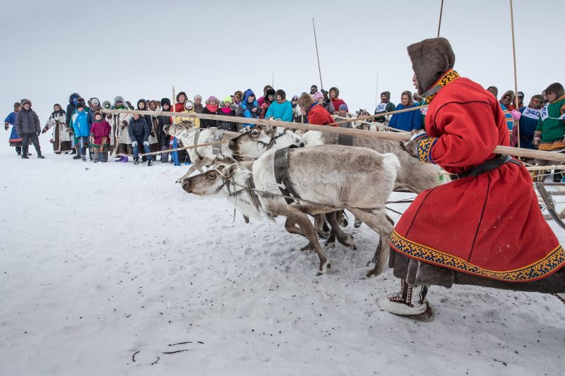 YAMALO, RUSSIA - MAY 3 : Participants from Nenets Autonomous Okrug are seen during a reindeer race on the Reindeer Herders Day in the Yamalo-Nenets Autonomous Okrug, Russia, on May 3, 2016. Sergey Anisimov / Anadolu Agency