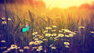 Butterfly flying spring meadow daisy flowers