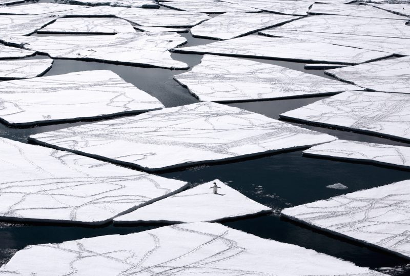 """This undated handout photo received from the Antarctic Ocean Alliance on October 28, 2016 shows a adelie penguin on pack ice in the Ross Sea in Antarctica.    The world's largest marine reserve aimed at protecting the pristine wilderness of Antarctica will be created after a """"momentous"""" agreement was finally reached on October 28, 2016 with Russia dropping its long-held opposition. / AFP PHOTO / Antarctic Ocean Alliance / John Weller / RESTRICTED TO EDITORIAL USE - MANDATORY CREDIT  """"AFP PHOTO  / ANTARCTIC OCEAN ALLIANCE / JOHN WELLER"""" - NO MARKETING NO ADVERTISING CAMPAIGNS - DISTRIBUTED AS A SERVICE TO CLIENTS - NO ARCHIVES - NO SALES - ONE TIME USE - TO BE USED EXCLUSIVELY WITH AFP STORY ANTARCTICA-AUSTRALIA-ENVIRONMENT-CONSERVATION /"""