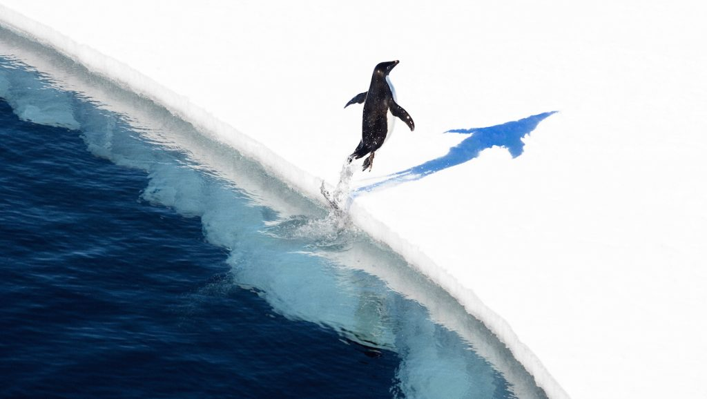 """This undated handout photo received from the Antarctic Ocean Alliance on October 28, 2016 shows a adelie penguin jumping onto the ice in the Ross Sea in Antarctica. The world's largest marine reserve aimed at protecting the pristine wilderness of Antarctica will be created after a """"momentous"""" agreement was finally reached on October 28, 2016 with Russia dropping its long-held opposition. / AFP PHOTO / Antarctic Ocean Alliance / John Weller / RESTRICTED TO EDITORIAL USE - MANDATORY CREDIT  """"AFP PHOTO  / ANTARCTIC OCEAN ALLIANCE / JOHN WELLER"""" - NO MARKETING NO ADVERTISING CAMPAIGNS - DISTRIBUTED AS A SERVICE TO CLIENTS - NO ARCHIVES - NO SALES - ONE TIME USE - TO BE USED EXCLUSIVELY WITH AFP STORY ANTARCTICA-AUSTRALIA-ENVIRONMENT-CONSERVATION /"""