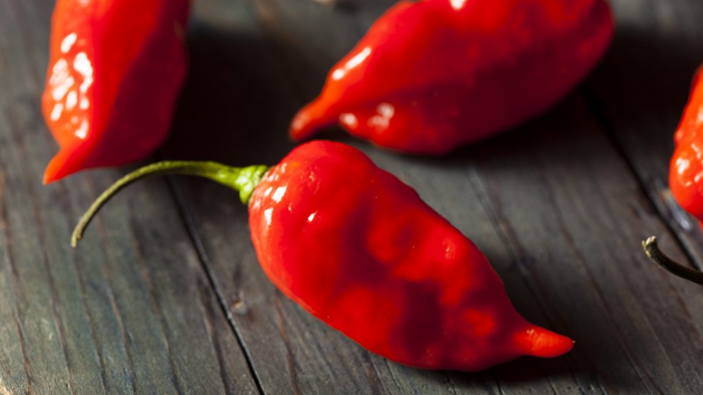 Spicy Hot Bhut Jolokia Ghost Peppers on a Background