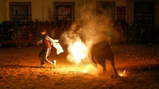 """The """"Toro de Jubilo"""" or """"Toro de fuego"""" (The Bull of Fire) is a festival that takes place in Medinaceli, Soria (Spain). Every year, on the second weekend of November, as soon as the sun sets, bull are brought into the town square. The bull is surrounded and restrained by participants. During this festival, a bull is tied to a post. Balls are then placed on each horn of the bull and lit a flame. A think layer of mud on the back and face of the bull helps protect the bull from physical injury or burns. The bull is then released by the square, which has 5 fire lit bonfires symbolizing five martyrs.  Photo: Rodrigo Garcia/NurPhoto"""