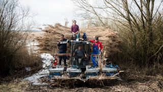 Workers ride on a reaper-binder machine during a reed harvest on Lake Kis-Balton, near Zalaszabar, Hungary, on Monday, Feb. 22, 2016. Hungary has been providing reed to Western Europe since at least 1967, with Germany as its main export target country. Photographer: Akos Stiller/Bloomberg via Getty Images