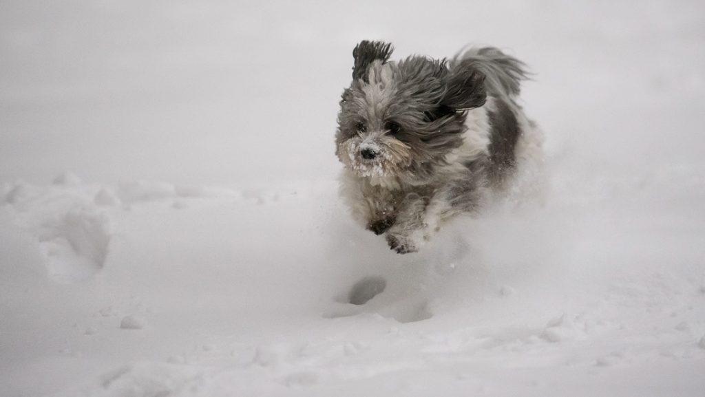 Salgótarján, 2017. január 13. Egy kutya szalad a hóban a Beszterce-lakótelepen Salgótarjánban 2017. január 13-án. MTI Fotó: Komka Péter