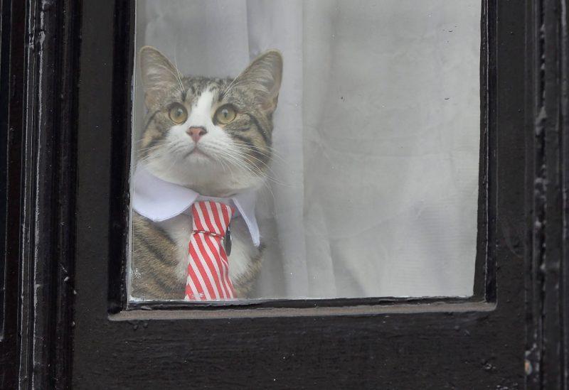 Az Assange-ügy Nagy-Britanniában
