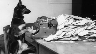 Petra, the Alsatian dog from the B.B.C's children's programme, 'Blue Peter' answering her fan mail.   (Photo by John Pratt/Getty Images)
