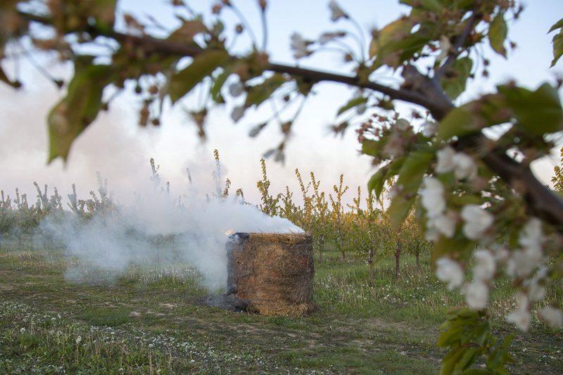 Nagyrécse, 2017. április 21.Virágzó cseresznyefa egy gyümölcsösben, a Zala megyei Nagyrécsénél, ahol füstöléssel védekeznek a fagy ellen 2017. április 21-én. A településen hajnalban -2 Celsius-fokot mértek.MTI Fotó: Varga György