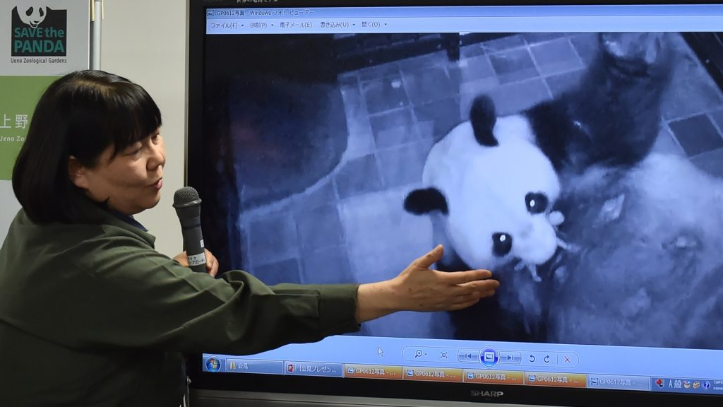 Ueno Zoological Gardens official Mikako Kaneko shows images of the birth of a baby panda during a press conference in Tokyo on June 12, 2017.  The Japanese zoo celebrated the first birth of a baby panda in five years on June 12, with the tiny cub small enough to fit in the palm of a human hand.  / AFP PHOTO / Kazuhiro NOGI