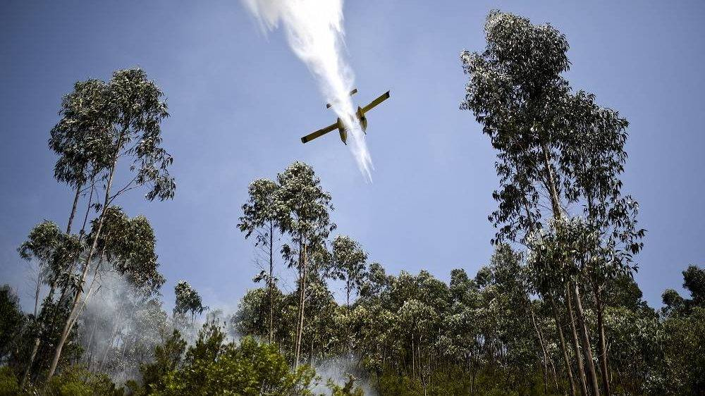 A firefighter plane drops water on a wildfire at Cernache de Bonjardim in Serta on June 20, 2017. The huge forest fire that erupted on June 17, 2017 in central Portugal killed at least 64 people and injured 135 more, with many trapped in their cars by the flames.   / AFP PHOTO / PATRICIA DE MELO MOREIRA