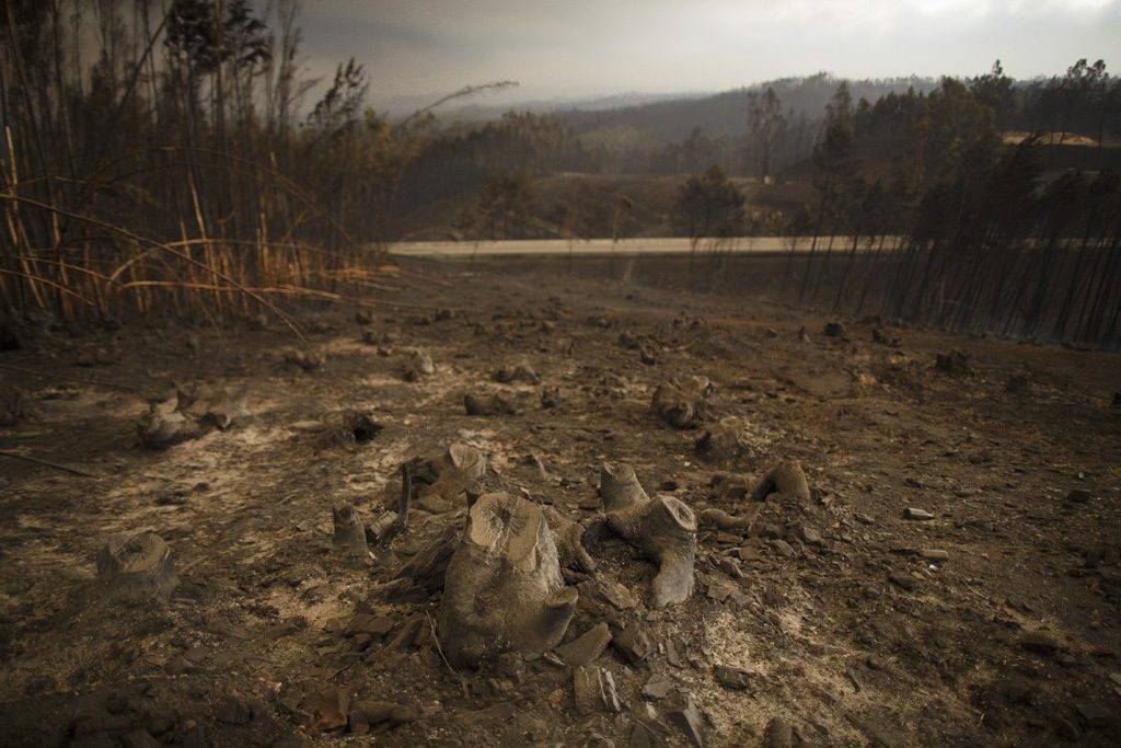 LEIRIA, PORTUGAL - JUNE 18:  A burnt landscape is seen after a wildfire took dozens of lives on June 18, 2017 near Castanheira de Pera, in Leiria district, Portugal. On Saturday night, a forest fire became uncontrollable in the Leiria district, killing at least 62 people and leaving many injured. Some of the victims died inside their cars as they tried to flee the area.  (Photo by Pablo Blazquez Dominguez/Getty Images)
