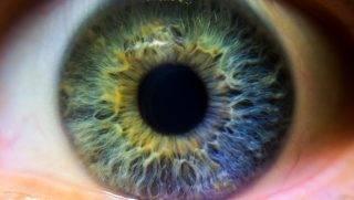 A green. blue and purple iris. A multi colored human eye.