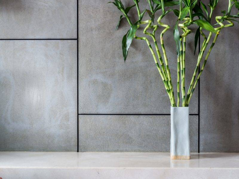Blank modern room decorated with vase of Lucky bamboo (Belgian evergreen)