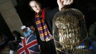 """Oscar Sieling from Copenhagen holds up his stuffed owl as he waits for the release of the final installment of the Harry Potter series of books at Waterstones bookstore on Piccadilly in London, 20 July 2007. """"Harry Potter and the Deathly Hallows"""" is released at 00.01am on 21 July and is the seventh book in the story of the young wizard.  / AFP PHOTO / LEON NEAL"""