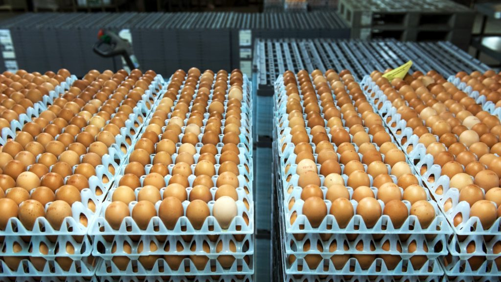 """Eggs are pictured at Van Raai egg factory in Woudenberg, on November 18, 2014. A new kind of bird flu hitting European poultry farms will surely continue to spread among birds, the World Health Organization said urging countries to be """"vigilant"""". AFP PHOTO /ANP REMKO DE WAAL Netherlands out / AFP PHOTO / ANP / REMKO DE WAAL"""