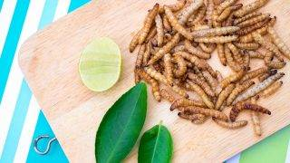 Fried bamboo caterpillar in kitchen background. Bamboo worms have very high protein. and higher than meat.