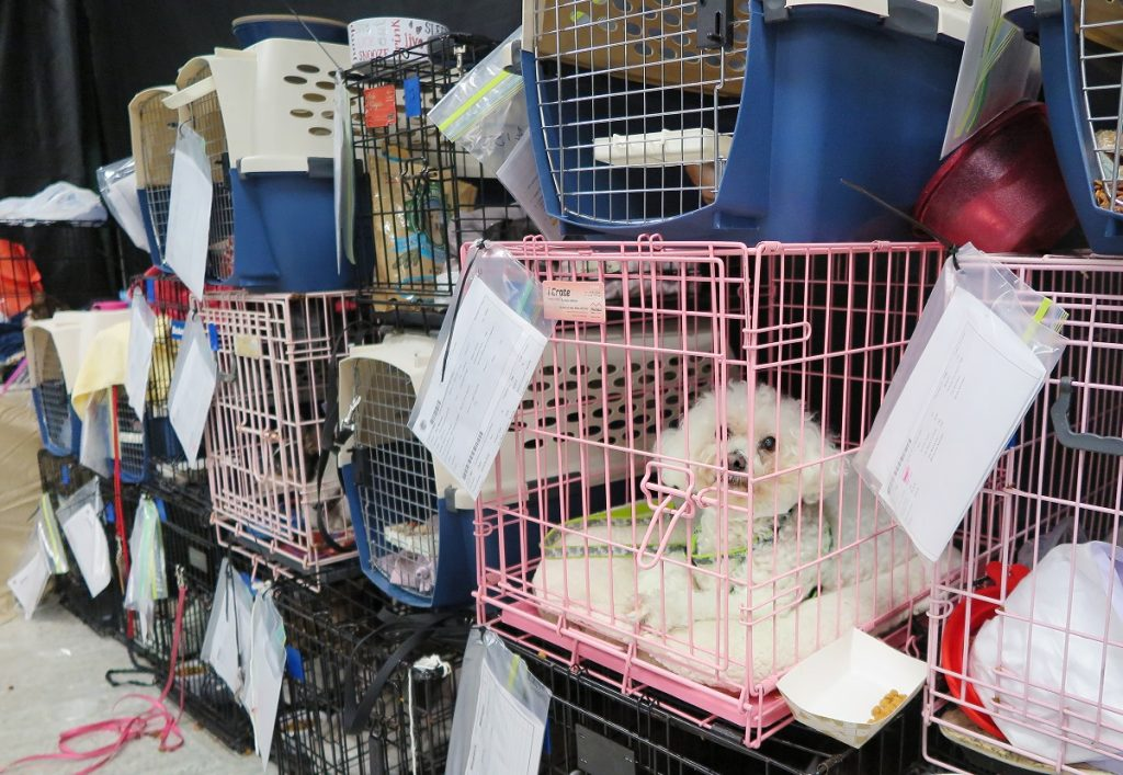 Pets are kept in cages in a gym in Palm Beach County, US, 9 September 2017. Tens of thousands of people have to flee from hurricane 'Irma'. Photo: Saskia Fröhlich/dpa