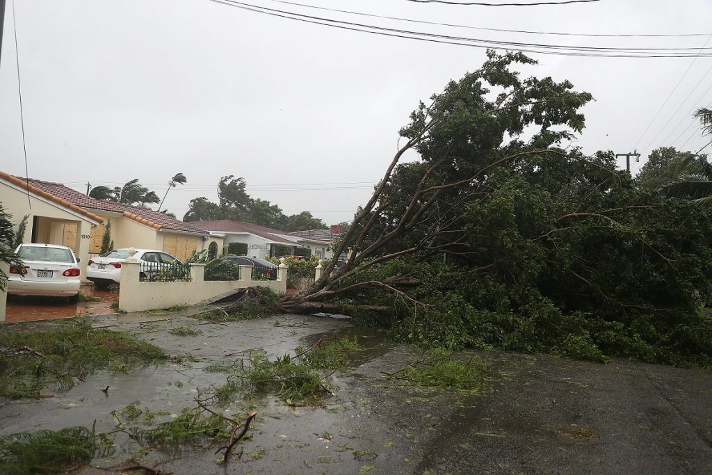 MIAMI, FL - SEPTEMBER 10: Trees and branches are seen after being knocked down by the high winds as hurricane Irma arrives on September 10, 2017 in Miami, Florida. Florida will take a hit by the Hurricane which will come ashore at category 4.   Joe Raedle/Getty Images/AFP