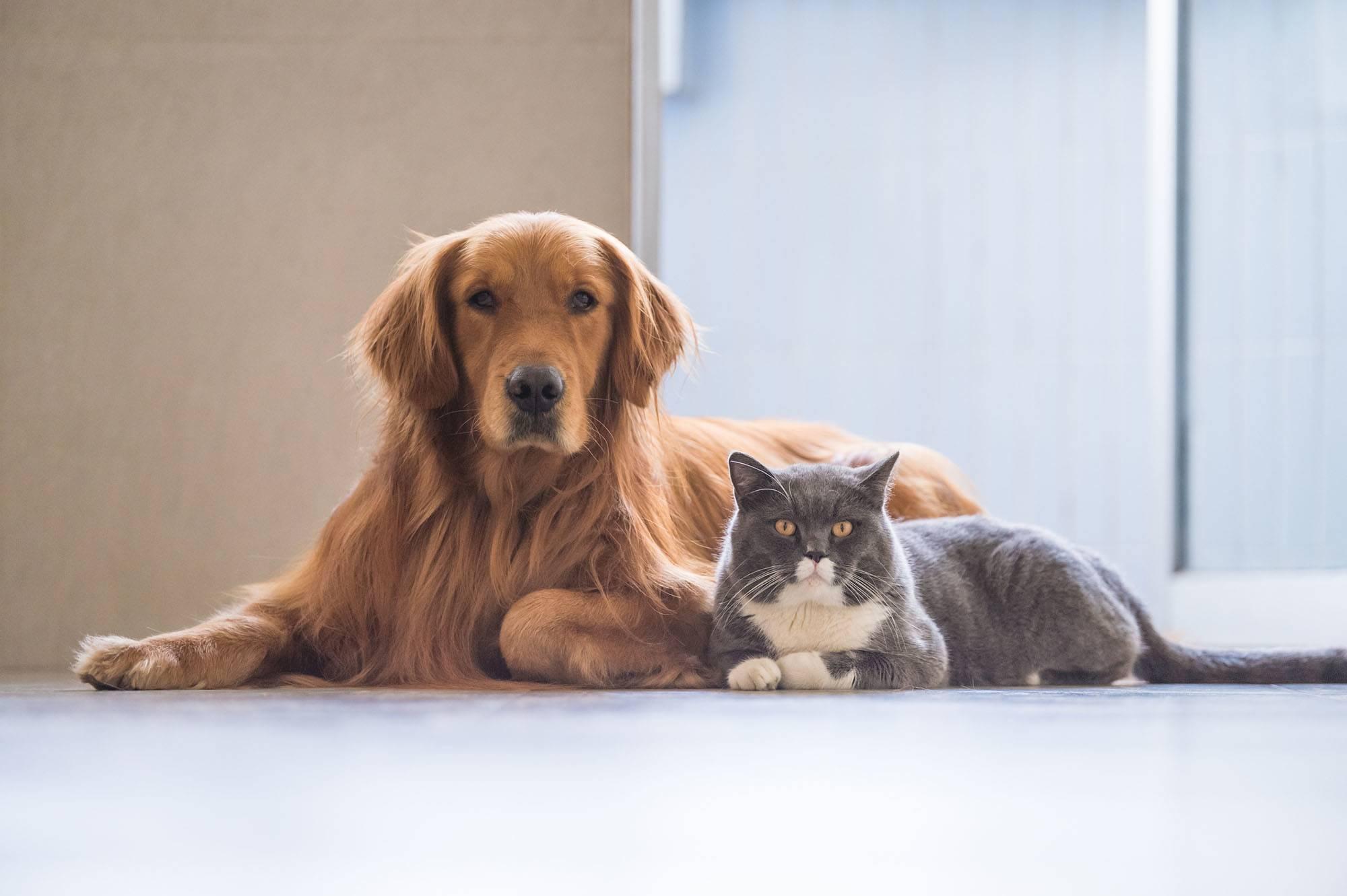 voltak kutyái és macskái