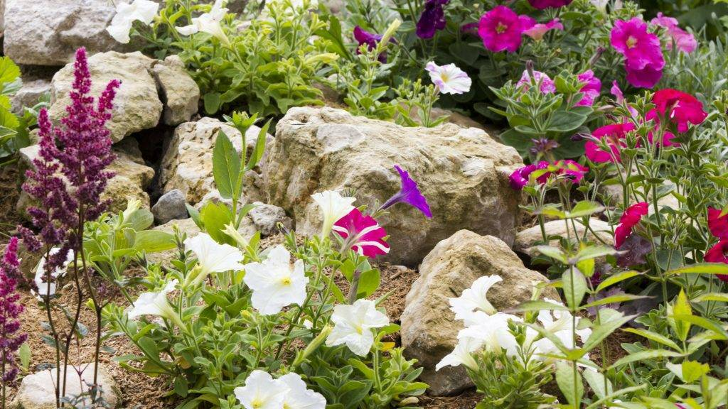 Beautiful rock garden with many different plants