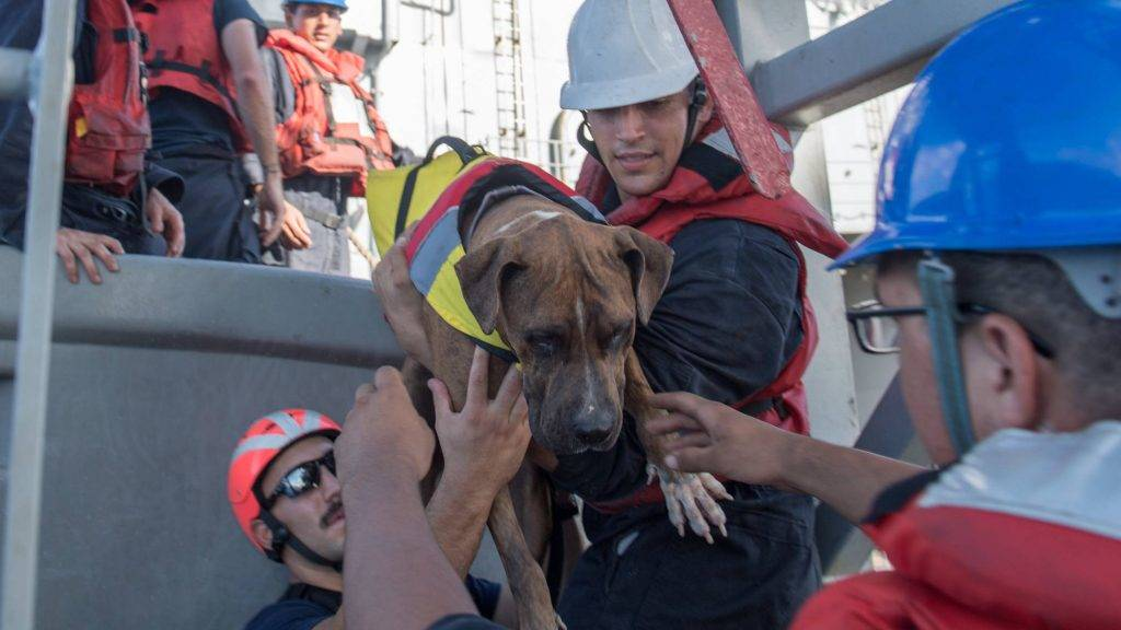 "A handout photo released on October 26, 2017 by the US Navy shows sailors helping Zeus, one of two dogs who were accompanying two mariners who were aided on October 25 by the amphibious dock landing ship USS Ashland (LSD 48) in the Pacific Ocean.  Ashland, operating in the Indo-Asia-Pacific region on a routine deployment, rescued two American mariners who had been in distress for several months after their sailboat had a motor failure and had strayed well off its original course while traversing the Pacific Ocean.   / AFP PHOTO / US NAVY / Jonathan CLAY / RESTRICTED TO EDITORIAL USE - MANDATORY CREDIT ""AFP PHOTO / US NAVY / Jonathan Clay"" - NO MARKETING NO ADVERTISING CAMPAIGNS - DISTRIBUTED AS A SERVICE TO CLIENTS"