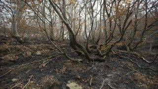 ITALY, Cumiana:  Damage from wildfire is seen near Cumiana in the Piedmont region on October 27, 2017. - Stefano Guidi