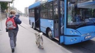 Budapest, 2013. június 2. Magyar gyártású, alacsonypadlós midi autóbusz a Móricz Zsigmond körtéren 2013. június 2-án. A jármûvet -, amely az Infoparkban közlekedõ 203-as autóbusz útvonalán, illetve hétvégén 27-esként a Gellérthegyen közlekedik, de a késõbbiekben várhatóan a város más pontjain is feltûnik majd, - egy évre vette bérbe a BKV. MTI Fotó: Beliczay László