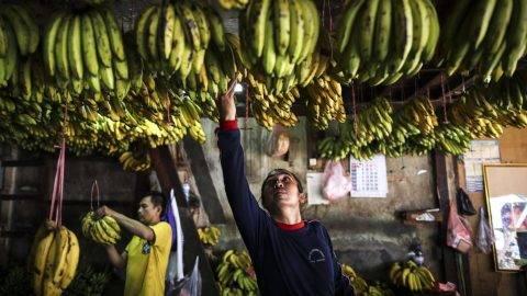 Jakarta, 2017. július 20. Indonéz munkások frissen szüretelt banánfürtöket osztályoznak egy jakartai termelõi piacon 2017. július 20-án. (MTI/EPA/Mast Irham)