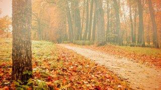 Foggy autumn landscape view of foggy autumn park with yellowed fallen autumn leaves, soft focus applied - autumn landscape in cloudy weather with yellowed autumn trees along lonely autumn alley