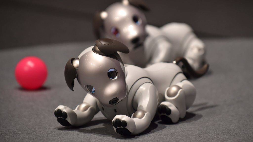 """Sony's latest entertainment robots """"aibo"""" are displayed during a press preview at the company's headquarters in Tokyo on November 1, 2017.    Japanese electronics giant Sony is marking the year of the dog by bringing back to life its robot canine -- packed with artificial intelligence and internet capability. / AFP PHOTO / Kazuhiro NOGI"""