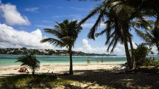 Beach and coconut trees, Gosier island, Guadeloupe, France